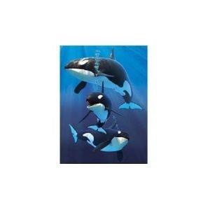 A6 3D Jotter - Orcas