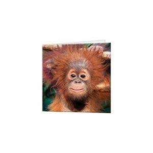 A6 3D Jotter - Baby Orangutan